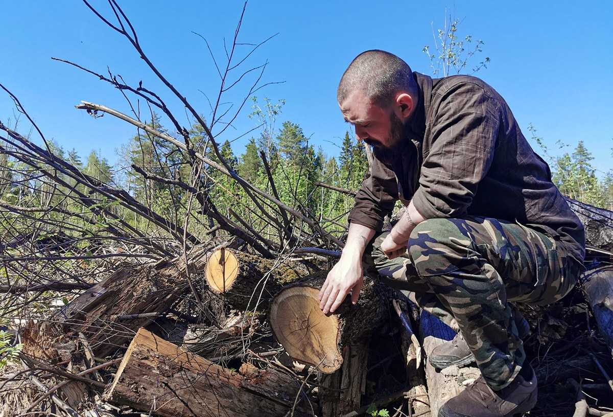 Павел Пашков вырубка лесов
