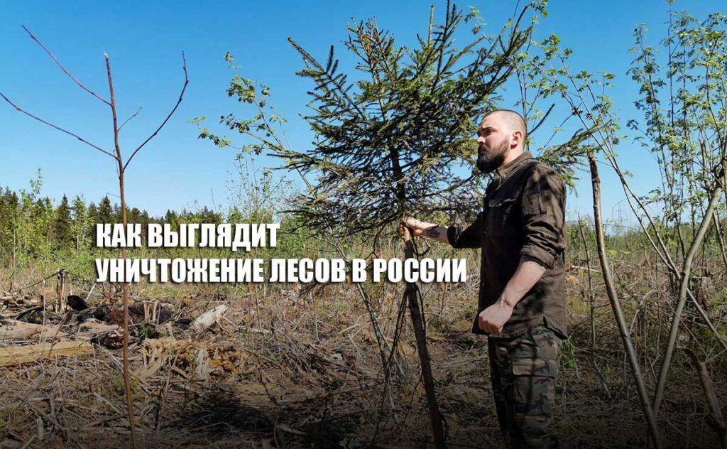 Известный российский путешественник Павел Пашков показал, как выглядит уничтожение лесов России