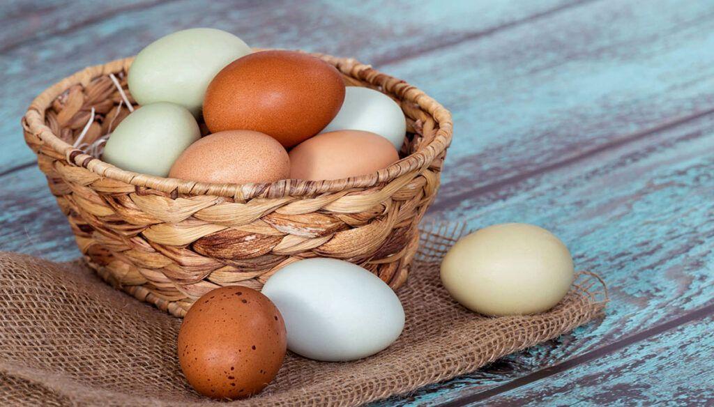 Эксперт пояснил разницу между яйцами с белой и темной скорлупой